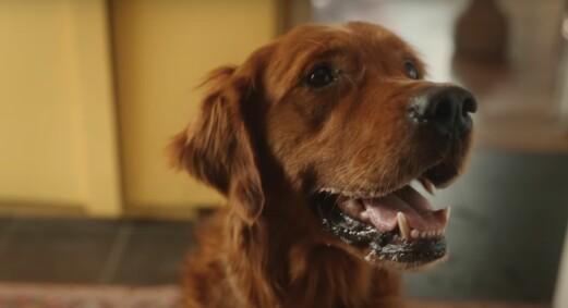 Har kåret årets beste reklamefilm: – Føles fantastisk