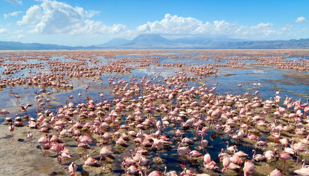 Flamingo colony i Lake Natron er at av naturens underverker seerne får bli med til i den nye dokumentarserien.